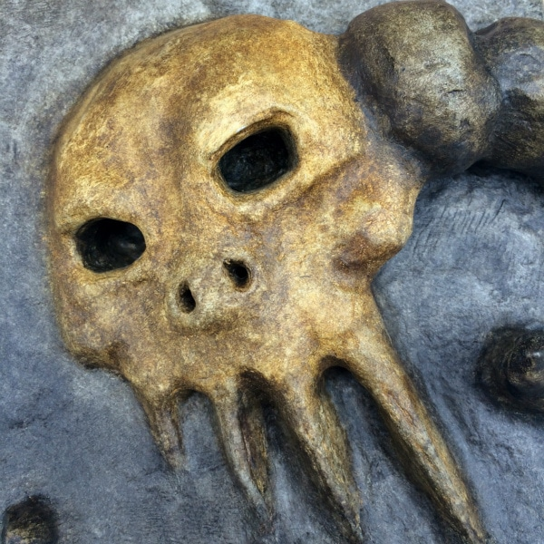Close-up of skull face.